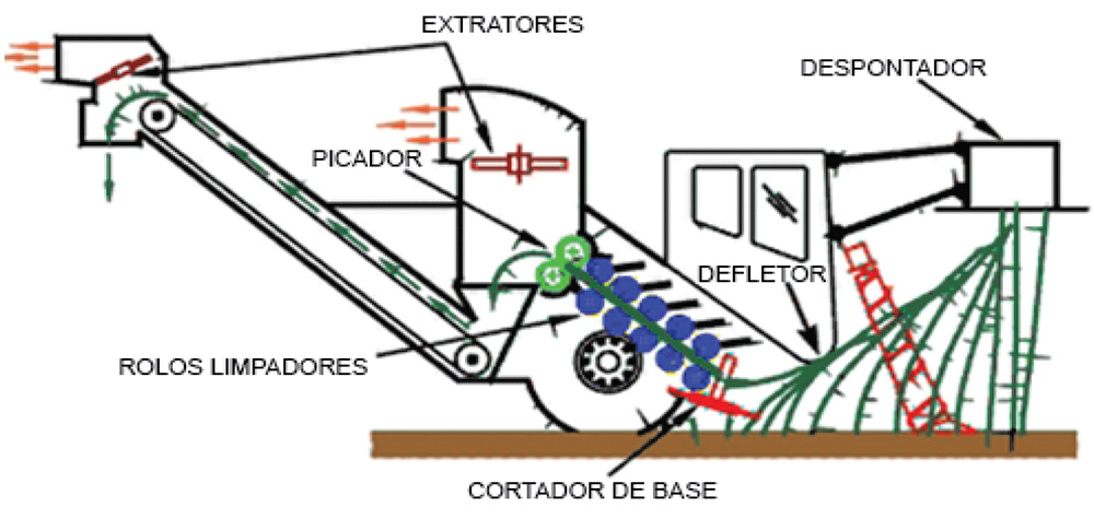 Etapas do processo de alimentação da colhedora de cana picada